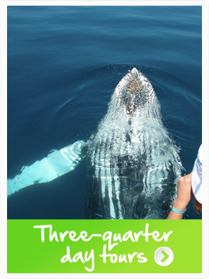 Hervey Bay three quarter day whale watching tours